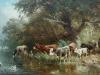 Drinkende koeien aan de rivieroever